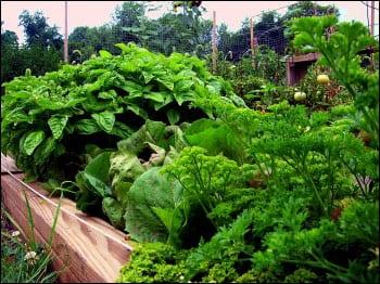 Cimaglia-community-garden-1